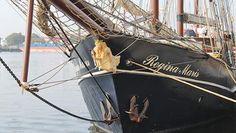 """Am Bug des Segelschiffes """"Regina Maris"""" hängt eine fürstlich gekleidete Frau, die einen kleinen Hund im Arm hält. © NDR Fotograf: Anja Haufe"""
