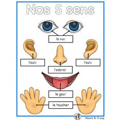 Discover the world through our 5 senses. Senses Preschool, Preschool Science, Preschool Worksheets, French Language Lessons, French Language Learning, French Lessons, French Flashcards, French Worksheets, French Teaching Resources