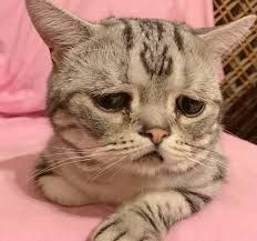 Meet Luhu, The Saddest Cat In The World Whose Photos Will Break Your Heart cute cat and kittens Cute Kittens, Little Kittens, Animals And Pets, Baby Animals, Funny Animals, Cute Animals, Cool Cats, World Cat, Sad Cat