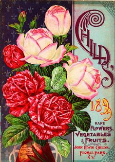 1899 Child's Rose Vintage Flowers Seed Packet Catalogue Advertisement Poster | eBay