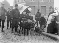 MINISTRY INFORMATION FIRST WORLD WAR OFFICIAL COLLECTION (Q 14776)   Refugees passing through Vieux Dieu, Antwerp 6th October 1914. Note mattresses piled on the dog cart.