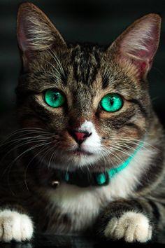 New free photo by kelvin valerio. Check out kelvin's profile: https://www.pexels.com/u/kelvin-valerio-135974/ #animal #cute #eyes