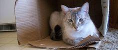 katten en kartonnen dozen :-)