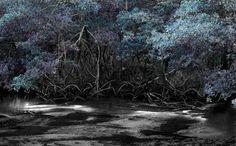"Saatchi Online Artist Laurent de Posson; Photography, ""Thinking of Lilies"" #art"