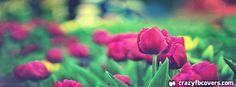 Tulip Garden Facebook Cover Facebook Timeline Cover