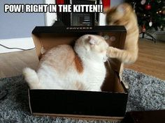 Sneak attack like my cat,Max Funny Cat Photos, Funny Cats, Funny Animals, Funny Pictures, Cute Animals, Funniest Animals, Pet Photos, Baby Animals, Funny Cat Compilation