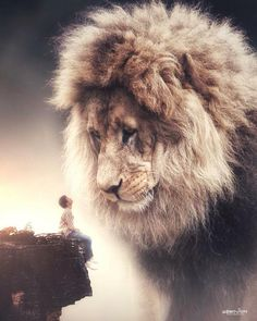 Lion of the Tribe of Judah Lion Pictures, Jesus Pictures, Surreal Photos, Surreal Art, Photographs, Giant Animals, Lion And Lamb, Lion Love, Photo Animaliere