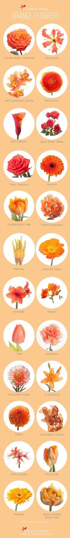 Our Favorite: Orange Flowers - more on Flower Muse blog
