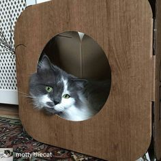 @Regrann from @mottylthecat -  Feeling wistful this #whiskerswednesday #yupthatsalliteration #poetrywaddup  #cat #cats #catlover #catbox #kitty #fluffykitty #meow #bestmeow #instacat #catstagram #catsofig #catsofinstagram #catsoflondon #mottylthecat #postyourpet #rescuecat #adoptdontshop #catfurnature @CatFurNature - #regrann