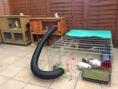 """I tried this with my bunnies hutches with irrigation pipe and drilled holes in it to filter out the pees and poops. The rabbits absolutely love it! It's nice and dark and they just chill in there as they see it as a safe and spot."" [nice idea]"