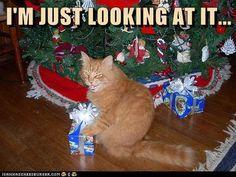 Christmas-Cat humor
