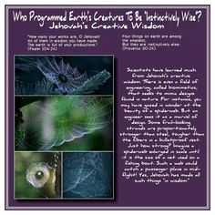 """Who Programmed Earth's Creatures To Be """"Instinctively Wise""""? Jehovah's Creative Wisdom // """"How many your works are, OJehovah!  All of them in wisdom you have made.  The earth is full of your productions.""""  (Psalm 104:24) // Four things on earth are among the smallest, But they are instinctively wise: (Proverbs 30:24) //  Scientists have learned much from Jehovah's creative wisdom. There is even a field of engineering, called biomimetics, that seeks to mimic designs found in nature. For…"""
