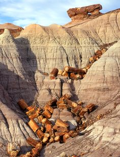 Petrified Wood Gallery, Petrified Forest National Park and Painted Desert in Arizona