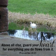 Proverbs 4:23  Link to 50 favorite proverbs, site and book by Liz Curtis Higgs.  Great blog for encouragement.