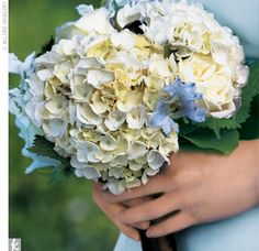 White and blue hydrangeas combined with chocolate cosmos were tied together with chocolate brown ribbon. Hydrangea Bouquet, Blue Hydrangea, White Hydrangeas, Chocolate Cosmos, Chocolate Brown, Cosmos Flowers, Cute Wedding Ideas, Wedding Gallery, Flower Decorations