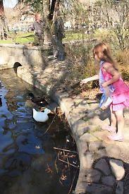Fun Places to Feed the Ducks in Marin