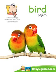 Teach your baby the sign for BIRD with this free printable poster. www.BabySignsToo.com #BabySigns
