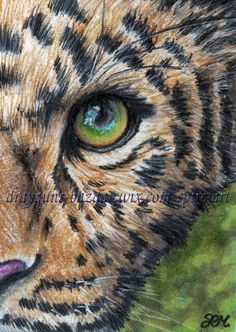ACEO Original Art Animal Wild Cat Leopard Eye Realism Illustration - SMcNeill #Realism