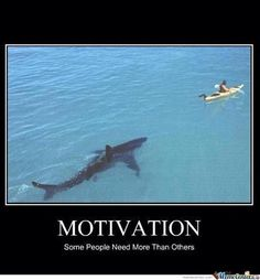 not funny.think i would die of a heart attack before the shark got me Tv Online Ao Vivo, Very Demotivational, Motivational Quotes, Funny Quotes, Inspirational Quotes, Just For Laughs, Akita, Laugh Out Loud, The Funny