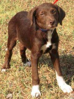 KoKo Adopted 11/21/13