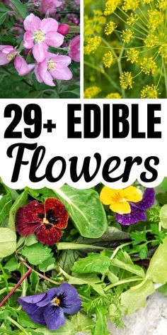 Edible Flowers from the Garden! Growing flowers you can eat adds an extra element of surpr Edible Plants, Edible Garden, List Of Edible Flowers, Best Edibles, Cottage Garden Plants, Incredible Edibles, Organic Vegetables, Garden Projects, Garden Ideas
