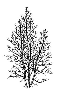 50 Ideas Birch Tree Silhouette Printable For 2019 Silhouette Images, Tree Silhouette, Photoshop, Digi Stamps, Art Plastique, Digital Image, Paper Cutting, Line Art, Art Lessons
