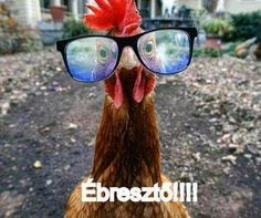 Ébresztő What Makes You Laugh, Lol, Smile, Farming, Funny Stuff, Night, Twitter, Healthy, Quotes