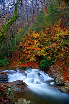 Laurel Creek Cascades | by abennett23