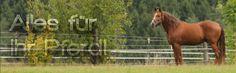 Horseback riding equipment