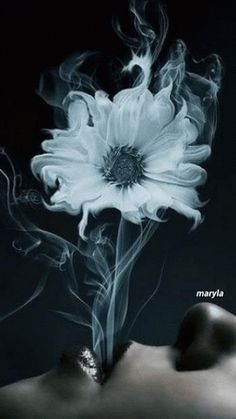 Flower's In My World ....
