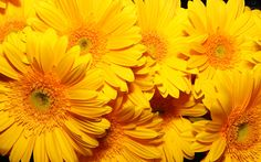 Download wallpaper flowers, very, yellow, background, flowers resolution 1920x1200