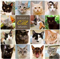 June is #AdoptAShelterCatMonth - Adopt a feline companion today! #ShelterCats