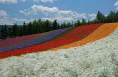 Summer at Hokkaido - Furano Tomita Flower Farm Canon IS Furano, One Day I Will, Being In The World, Flower Farm, Dreaming Of You, Places To Go, Around The Worlds, Meet, Japan
