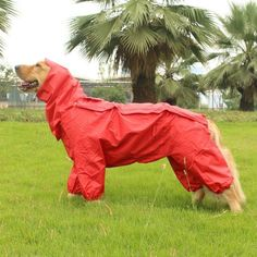 Ropa impermeable para perros grandes, chaquetas para perros al aire libre, ropa de gran tamaño, chaqueta impermeable para perros - Für meinen Hund - Camping With Cats, Dog Suit, Dog Raincoat, Pet Boutique, Dog Sweaters, Animal Fashion, Dog Coats, Baby Dogs, Dog Harness