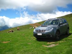 1000 Images About Subaru Forester On Pinterest Subaru