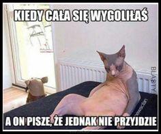 #śmieszne, #zabawne, #humor, #memy, #demotywatory, #obrazki Polish Memes, Funny Mems, Orangutan, Wtf Funny, Man Humor, Good Mood, Cool, Best Memes, Jokes