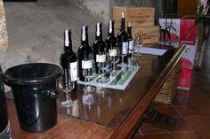 五感を駆使してワインを楽しむ・ポルトガルの最新ワイン事情