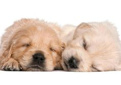 Safe and simple home remedies that protect your poochs health Read more in http://lovablepawsandclaws.com/