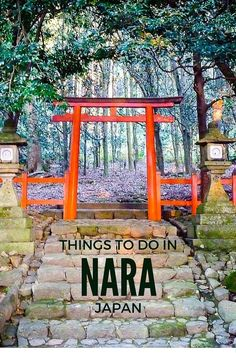 Nara is a beautiful city in Japan where tame deer roam the streets. Click to read all about what to do in Nara http://globalhelpswap.com/things-to-do-in-nara/