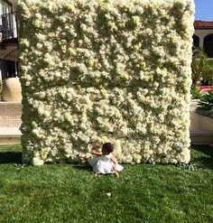 Já pensou em acordar e encontrar uma parede enorme coberta de flores? Esse foi o…
