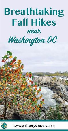 The greater Washington DC region is surrounded by miles of trails, from well-traveled paths through local parks to hidden gems that cross state lines into Virginia and Maryland. Here you'll find the best hiking trails from easy walks close to the city, to more challenging climbs in one of the National parks. This fall your travel bucket list should include a dose of adventure and the great outdoors! Easy hikes and nature walks include Meadowlark Botanical Garden and Roosevelt Island, while…