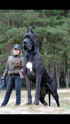 One big dog