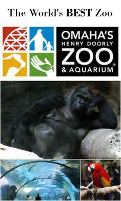 The Henry Doorly Zoo is the world's BEST zoo, find out why!