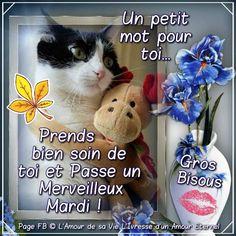 Un petit mot pour toi... Prends bien soin de toi et Passe un Merveilleux Mardi ! Gros Bisous #mardi chat peluche calin drole fleurs bouquet bisou