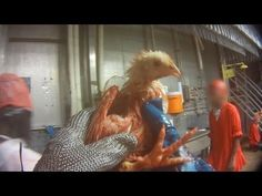 Mercy for Animals has uncovered some of the most sickening animal abuse imaginable by Tyson Foods. Please sign this petition.