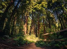 These trees are huge! I've visited these huge redwoods along the coast of California many times, and I don't think I could ever get used to how gigantic they really are. It's almost like an alien planet! - Big Sur, California - Photo from #treyratcliff Trey Ratcliff at http://www.stuckincustoms.com/
