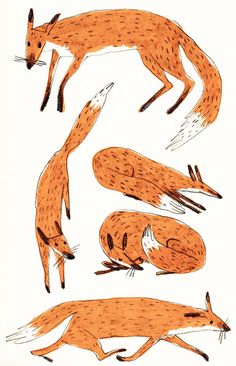 brionymaysmith:  Some foxes having a great old time
