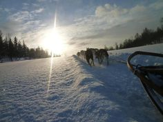Dog Sledding in Northern Norway | OutdoorMindedMag.com
