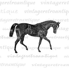 Antique Horse Image Digital Printable Download Graphic Illustration Vintage Clip Art for Transfers Making Prints etc HQ 300dpi No.2563