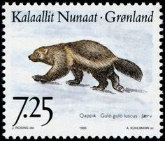 North American wolverine (Gulo gulo luscus), designed by Greenlandic artist Jens Christian Rosing (1925-2008), combined engraved by Arne Kühlmann and lithography, and issued by Greenland on September 7, 1995 as one of a set of three stamps depicting indigenous mammals, Scott No. 297, Facit No. 275.